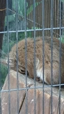 上野動物園 リスのゴメン寝