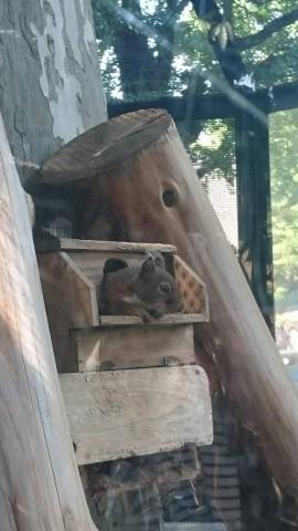 上野動物園 リス 小屋からこんにちは♪